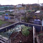 willoughby-road-allotments-23-11-2016-9