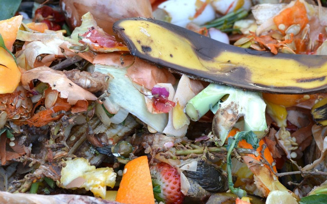 Learn how to get started with composting at Boston workshops